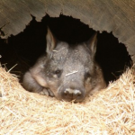 "Grammar Help for Your Content – ""You're"" vs. ""Your"" and the Wombat"